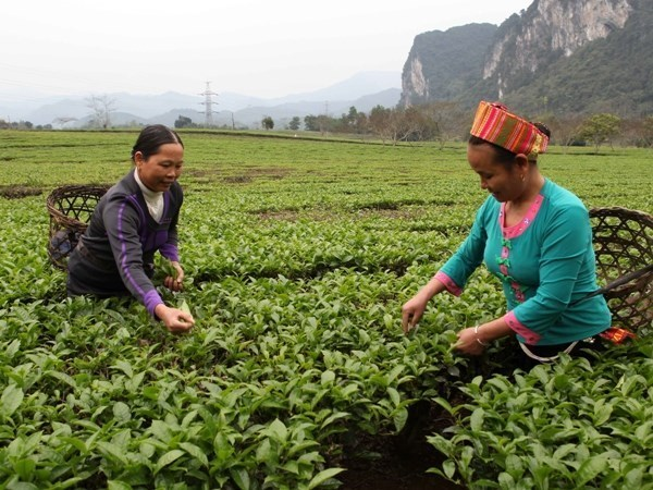Bank for Social Policies sees increased lending in 2015 hinh anh 1