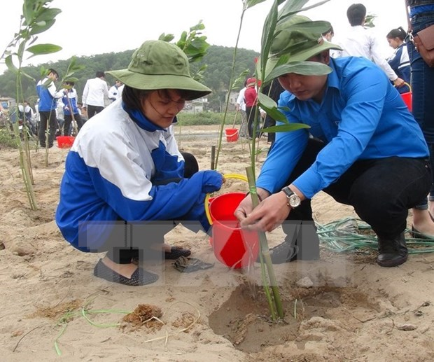 Hanoi becomes greener in lunar New Year hinh anh 1