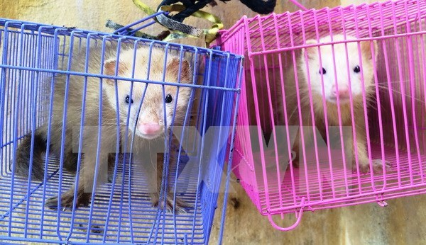 Vietnam suspends CITES-listed species trade with Laos hinh anh 1
