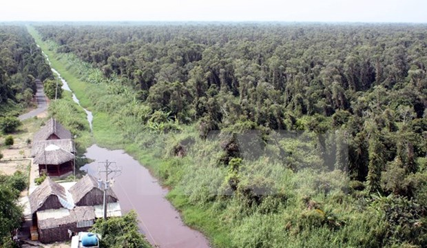 Ca Mau: cajuput forest faces high risk of fires hinh anh 1