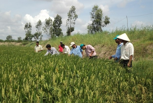 Sustainable agriculture transformation project launched in Hau Giang hinh anh 1