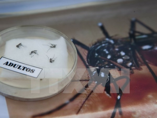 Cao Bang works to protect against Zika virus hinh anh 1