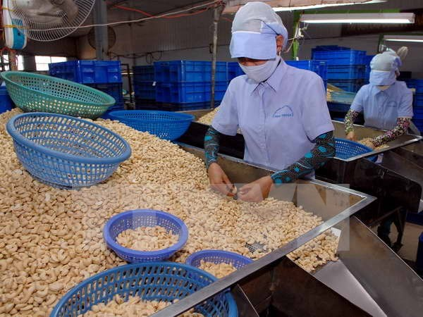 Vietnam's cashew exports expected to stay stable hinh anh 1