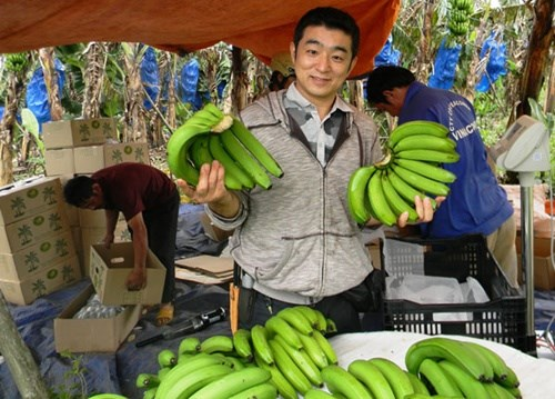 Price of export Vietnamese bananas soar following increased demand hinh anh 1