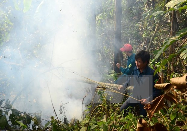 Localities hurt by widespread forest fires hinh anh 1