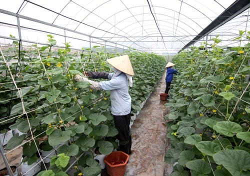 Speedy restructuring needed in agricultural sector hinh anh 1