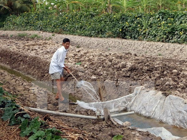 Techniques for farming in Mekong Delta salty land introduced hinh anh 1