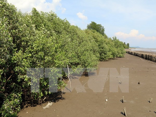RoK helps Thai Binh plant mangrove forests hinh anh 1