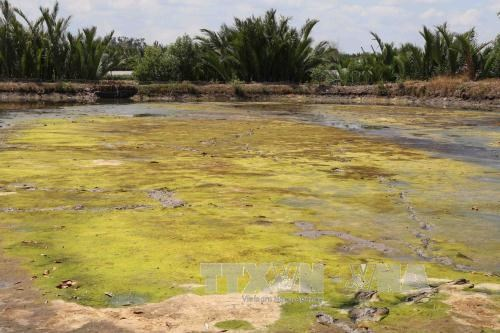 MRC: drought, saline encroachment continue in Mekong Delta hinh anh 1