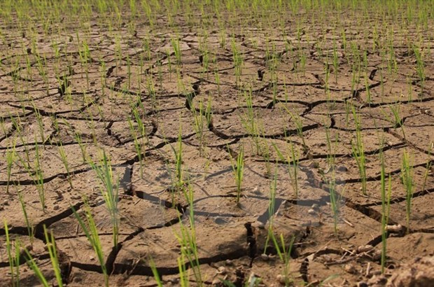 Drought may last several months: deputy environment minister hinh anh 1