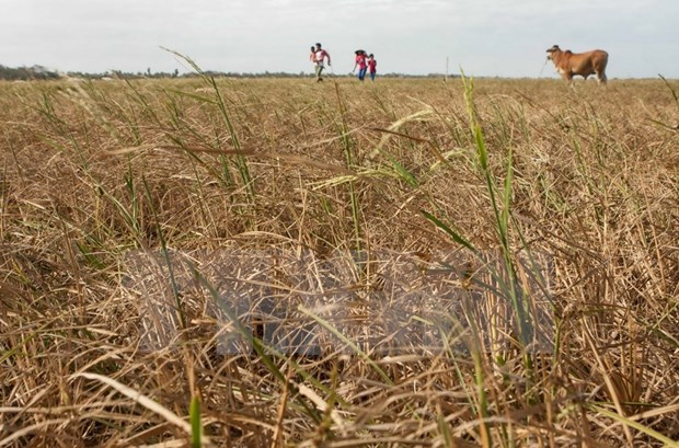 Farmers need support from gov't to tackle drought hinh anh 1