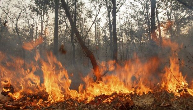 Indonesia tackles forest fires hinh anh 1