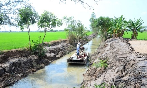 Locals join hands to fight against saline intrusion hinh anh 1