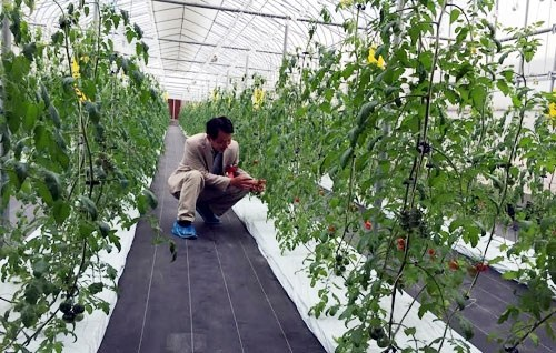 Smart farming a bright future for Vietnam hinh anh 1