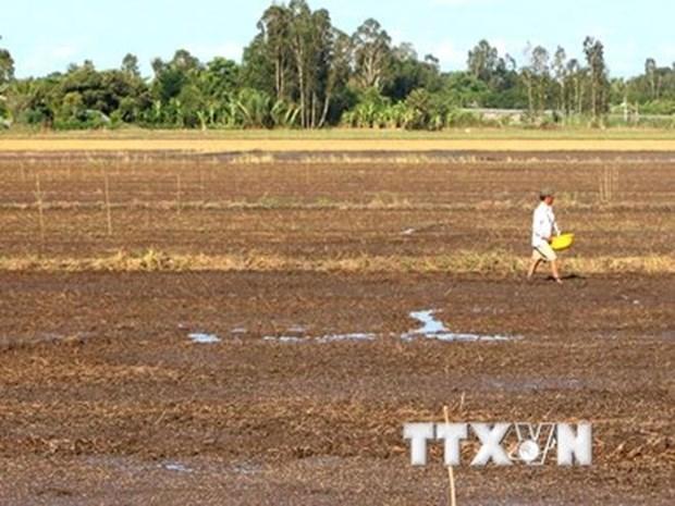 Saline intrusion hits shrimp farmers hinh anh 1