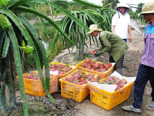 Vietnamese dragon fruit comes back to Taiwan hinh anh 1