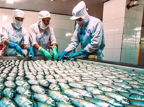 Vietnam's seafood exports to benefit from TPP hinh anh 1