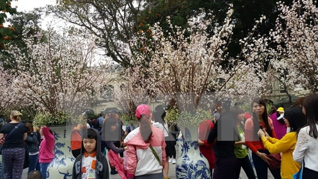 Japanese cherry blossom, investors to come to Dong Nai hinh anh 1