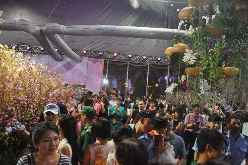 Cherry blossom festival kicks off in HCM City hinh anh 1