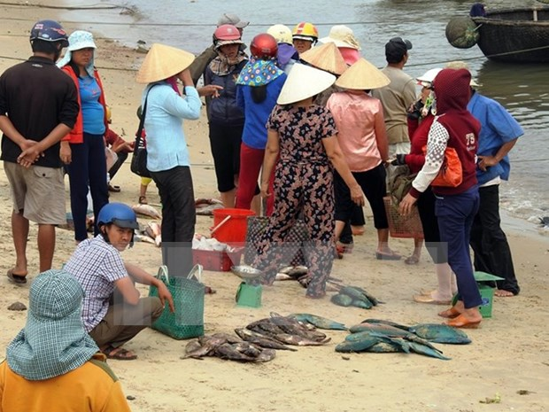 Cause of mass fish deaths probed hinh anh 1