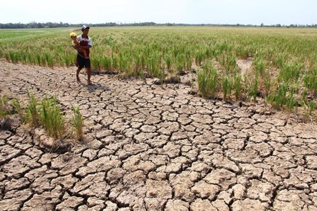 Cambodia launches water distribution campaign to drought –hit people hinh anh 1