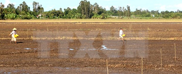 Tra Vinh loses 49.5 million USD due to drought, saline intrusion hinh anh 1