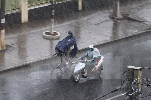 Downpour brings relief to drought-stricken Long An hinh anh 1