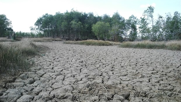 Drought-hit Ben Tre bears no festival fruit hinh anh 1