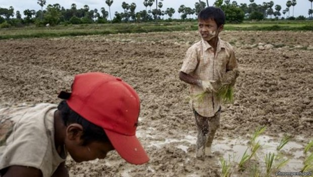 2.5 million Cambodians affected by severe drought hinh anh 1