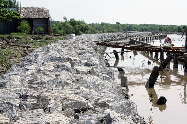 Nearly 18 bln VND for Ca Mau's recovery from drought, saline intrusion hinh anh 1