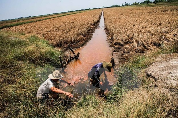 Drought impacts to be discussed at Mekong Delta forum hinh anh 1