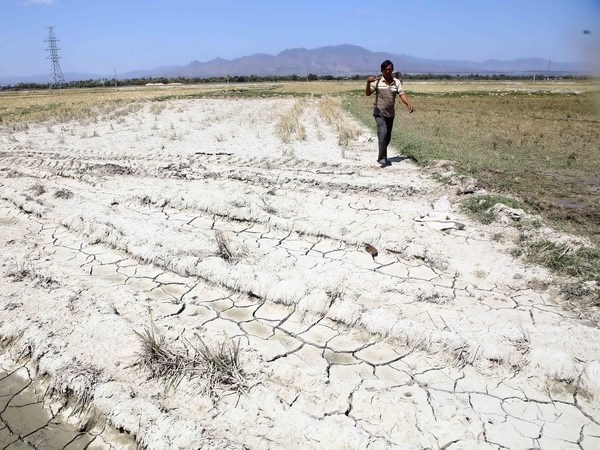 Solutions to drought in central provinces sought hinh anh 1