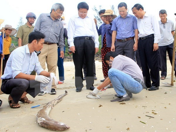 Deputy Minister: cause of unusual fish deaths to be announced hinh anh 1