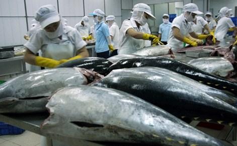 Vietnam's tuna exports decline 5.5 percent in Q1 hinh anh 1
