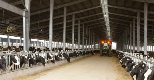 TH Group to launch organic milk products hinh anh 1