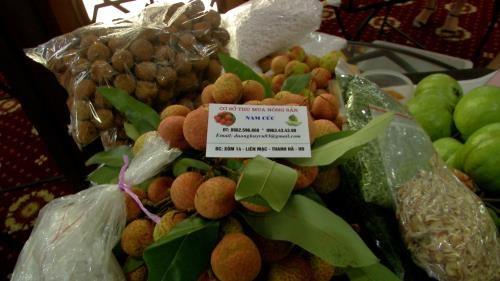 Firms boost fresh lychee exports via Lao Cai border gate hinh anh 1