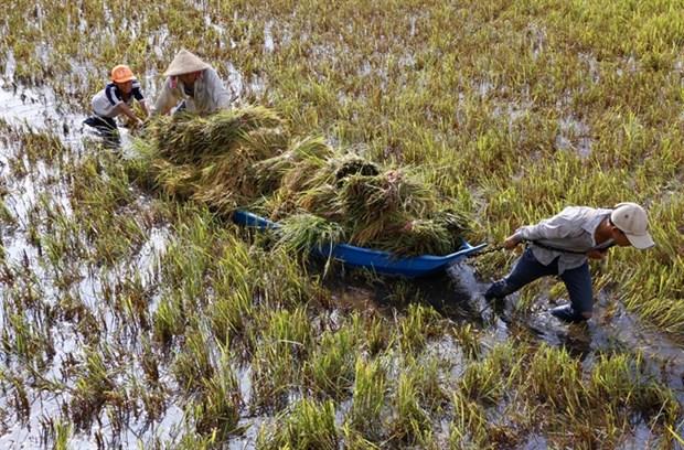 Rain, wind batter Mekong farms hinh anh 1
