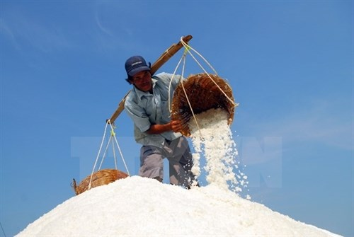 Deputy PM urges salt purchases to help farmers hinh anh 1