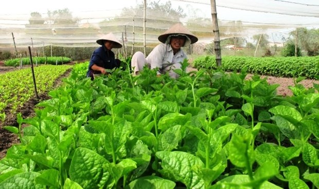 Conference seeks ways to build trademarks for farm produce hinh anh 1