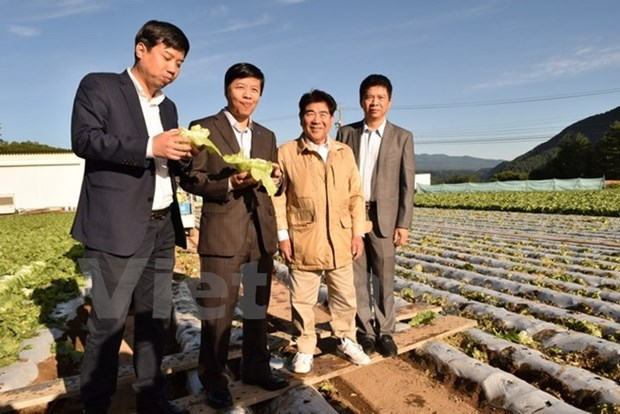 Japanese agricultural model eyes promoting links with Vietnam hinh anh 1