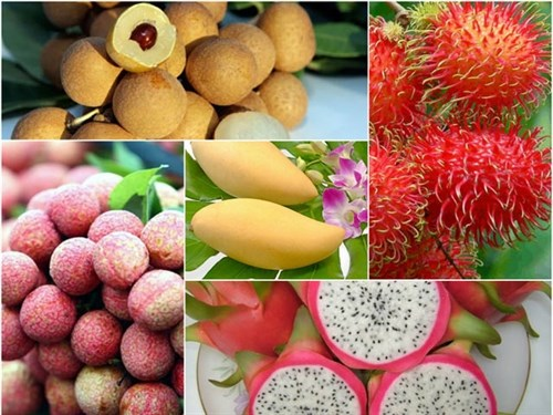 Fruit, vegetable export value up in H1 hinh anh 1