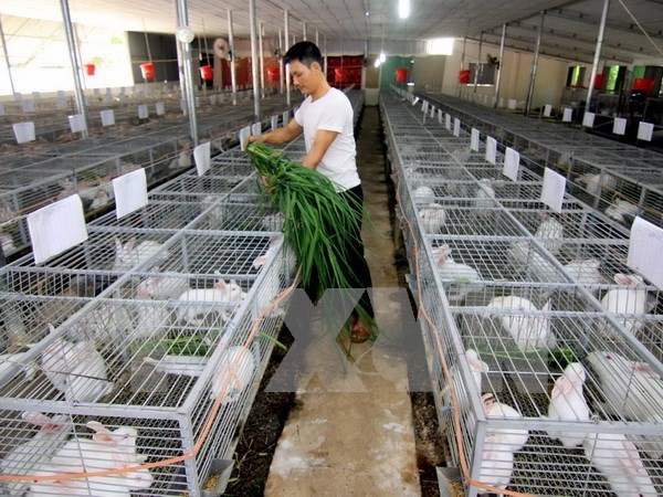 New-style cooperatives piloted in Mekong Delta hinh anh 1