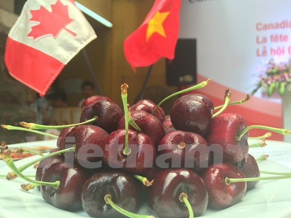 Canadian cherry introduced in Ho Chi Minh City hinh anh 1