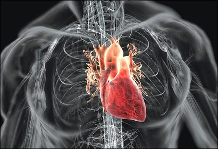 Cardiovascular diseases high in Vietnamese youths hinh anh 1