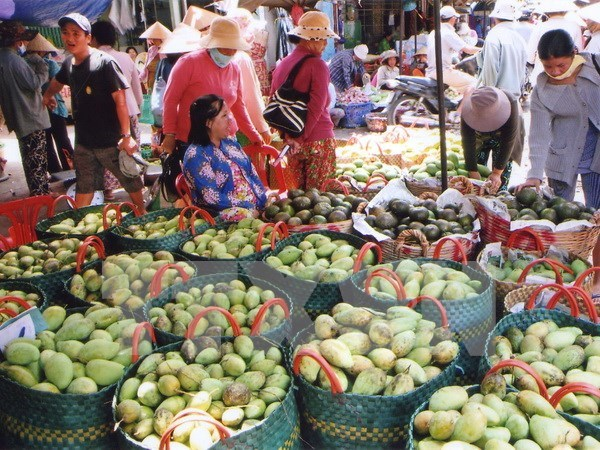 Vietnam exports mangoes to Australia hinh anh 1