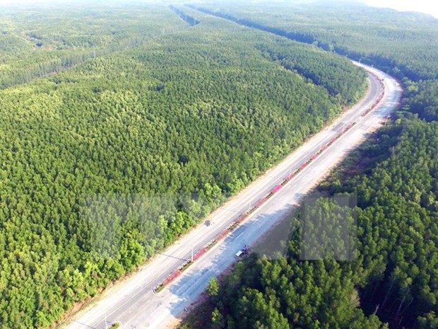 Vietnam has over 14 million hectares of forest: ministry hinh anh 1
