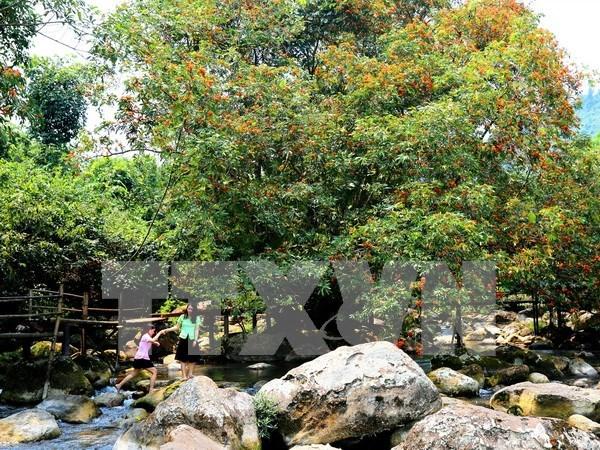 48 rare animals released into Phong Nha – Ke Bang National Park hinh anh 1