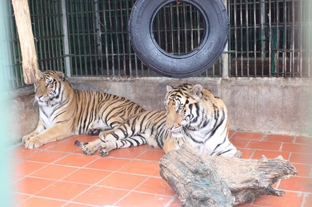 Transport firms urged to fight wildlife trade hinh anh 1