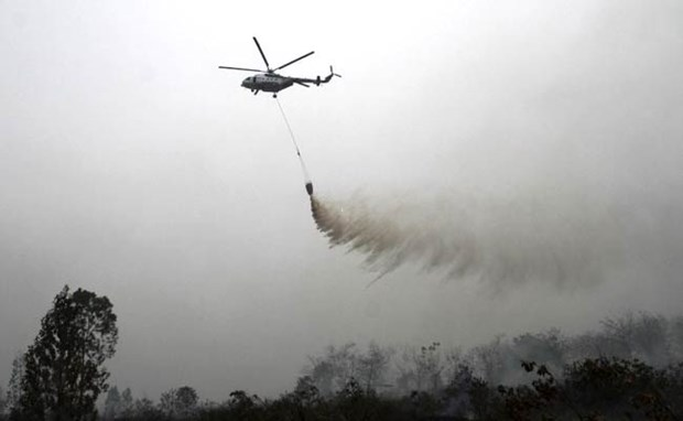 Indonesia warns of haze from forest fires hinh anh 1