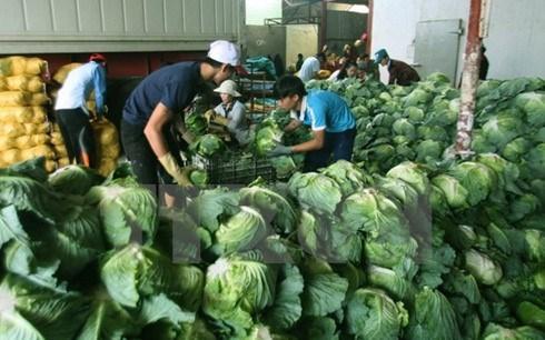 Ambassador: New Zealand can help Mekong Delta with hi-tech farming hinh anh 1